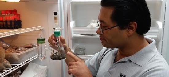 Investigadores crean sistema para eliminar toxicidad de residuos de pesticidas